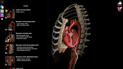 3D Anatomy Learning for Android - Free Download