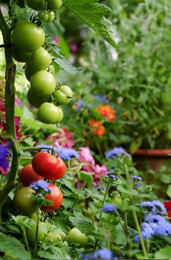 Consejos jardiner a bricolaje para android descargar gratis - Consejos de jardineria ...