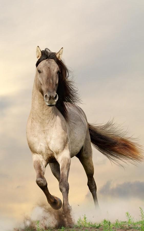 caballos fondos animados para android descargar gratis