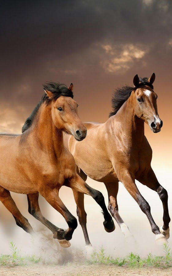 wild horses racing wallpaper - photo #23