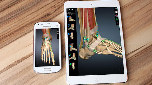 3D Anatomy Learning para Android - Descargar Gratis