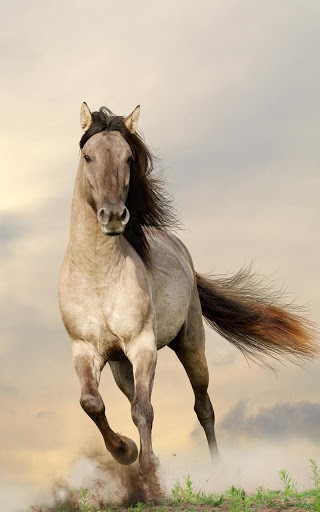 photo cheval fond ecran